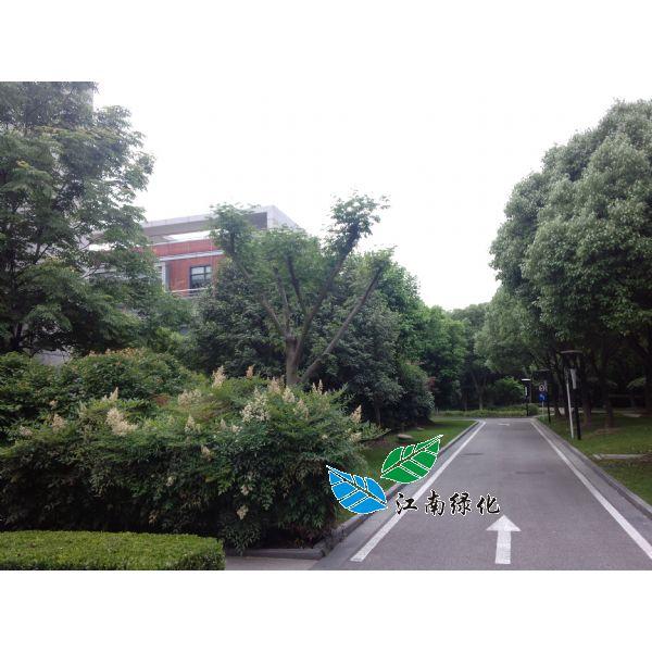 景观绿地养护