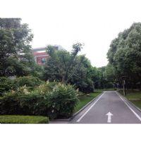 景观绿地养护现场照片